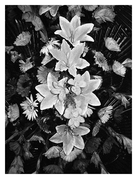 http://johan-attia.com/files/gimgs/37_flowers3.jpg