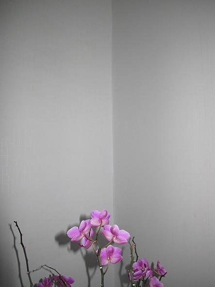 http://johan-attia.com/files/gimgs/38_orchidee1.jpg